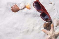 Spiaggia di sabbia con molti conchiglie ed occhiali da sole di rosso delle stelle marine Immagine Stock Libera da Diritti