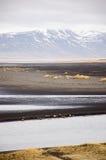Spiaggia di sabbia nera, erba asciutta, Hvitserkur, Islanda Fotografie Stock Libere da Diritti
