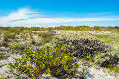 Spiaggia di Sanibel Fotografie Stock Libere da Diritti