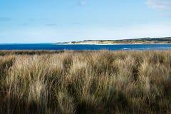 Spiaggia di Shelley dietro il pascolo al tramonto, Phillip Island, Victoria, Australia Immagine Stock Libera da Diritti