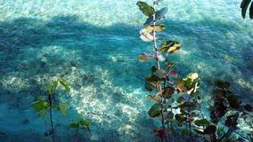 Spiaggia di Sosua Fotografia Stock Libera da Diritti