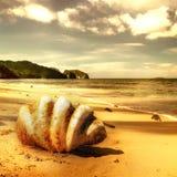 Spiaggia dorata Immagini Stock Libere da Diritti