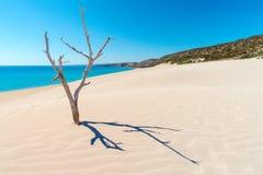 Spiaggia dorata fotografia stock