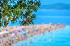 Spiaggia dorata del capo in Bol, Croazia Fotografia Stock Libera da Diritti