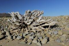 Spiaggia e cielo di legno della deriva Immagini Stock