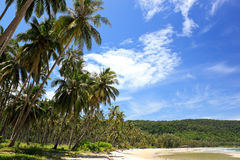 Spiaggia e cielo tropicali Immagini Stock