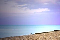 Spiaggia e gabbiani Immagine Stock