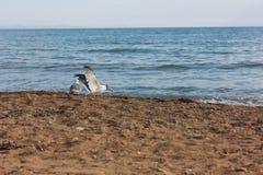 Spiaggia e gabbiani Fotografia Stock Libera da Diritti
