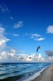 Spiaggia e gabbiano Fotografia Stock Libera da Diritti