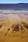 Spiaggia e linea costiera in Rio de la Plata Fotografia Stock Libera da Diritti