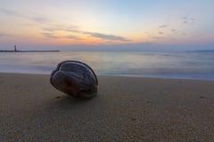 Spiaggia e noce di cocco Immagine Stock Libera da Diritti