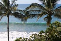 Spiaggia e palme Immagini Stock