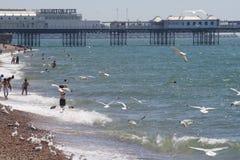 Spiaggia e pilastro di Brighton fotografie stock