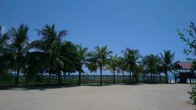 Spiaggia ed alberi Fotografia Stock