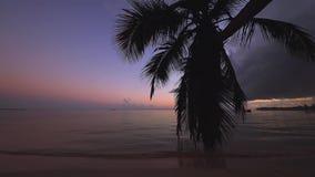 Spiaggia esotica Alberi del cocco contro il cielo tropicale di alba con le nuvole Vacanza estiva nei tropici stock footage