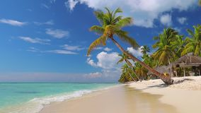 Spiaggia esotica con le palme intorno Concetto di vacanza e di festa Isola tropicale archivi video