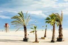 Spiaggia in flocculo di Narbonne Immagine Stock