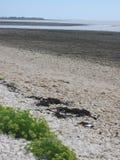Spiaggia francese con la bassa marea con alcune piante di giallo nella priorità alta Fotografia Stock