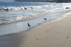 Spiaggia fuori della strada principale della costa del Pacifico Fotografia Stock Libera da Diritti