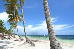 Spiaggia guarnita palma Fotografie Stock