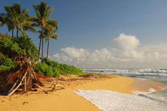 Spiaggia Hawai fotografia stock libera da diritti
