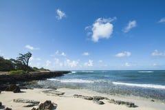 Spiaggia Hawai della baia della tartaruga Immagine Stock