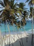 Spiaggia inferiore della baia, Barbados Immagine Stock