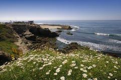 Spiaggia a La Jolla, San Diego Immagini Stock