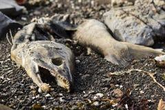 Spiaggia mettente su di color salmone morta Immagini Stock