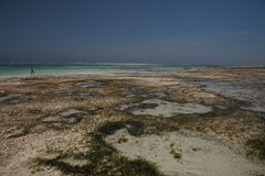 Spiaggia in Michamwi-Pingwe Zanzibar, Fotografie Stock