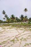 Spiaggia nel Kerala, (l'India) fotografia stock