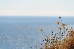 Spiaggia nell'Oregon fotografia stock