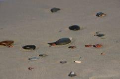 Spiaggia nella costa di Zelenogradsk Baltico Fotografia Stock