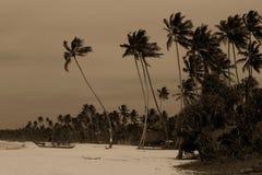 Spiaggia nello Sri Lanka Fotografia Stock Libera da Diritti