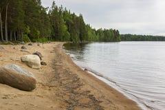 Spiaggia nordica selvaggia del lago della foresta Fotografie Stock Libere da Diritti