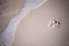 Spiaggia Paw About da lavare via Fotografia Stock Libera da Diritti