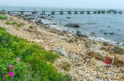 Spiaggia pietrosa Pier Piink Roses Padnaram Dartmouth mA di mattina nebbiosa immagini stock libere da diritti