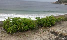 Spiaggia Rio de Janeiro Fotografie Stock Libere da Diritti