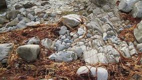 Spiaggia rocciosa in Dorset vicino alla porta di Durdle video d archivio