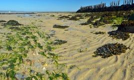 Spiaggia sabbiosa a bassa marea dopo dall'azienda agricola dell'ostrica Fotografie Stock