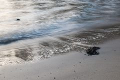 Spiaggia sabbiosa con acqua fotografia stock libera da diritti