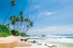 Spiaggia sabbiosa con le palme nello Sri Lanka Fotografie Stock