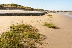 Spiaggia sabbiosa con le piante vicino a Portbail La Normandia Francia fotografia stock