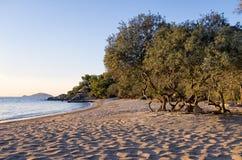 Spiaggia sabbiosa in Sithonia, Grecia, al crepuscolo Immagine Stock