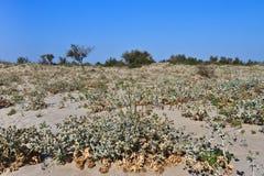 Spiaggia selvaggia Fotografia Stock Libera da Diritti