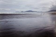 Spiaggia selvaggia all'isola di Chiloe Immagine Stock