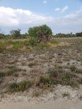 Spiaggia, sguardo abbandonato, deserto immagine stock libera da diritti
