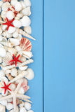 Spiaggia Shell Beauty Fotografie Stock Libere da Diritti