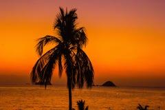Spiaggia sola dell'albero Immagini Stock