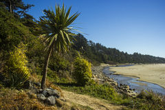 Spiaggia soleggiata Fotografie Stock